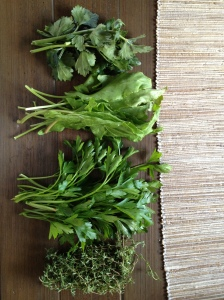 "my ""stuffing"" herbs: CSA celery root tops, CSA parsley, CSA sorrel and thyme"